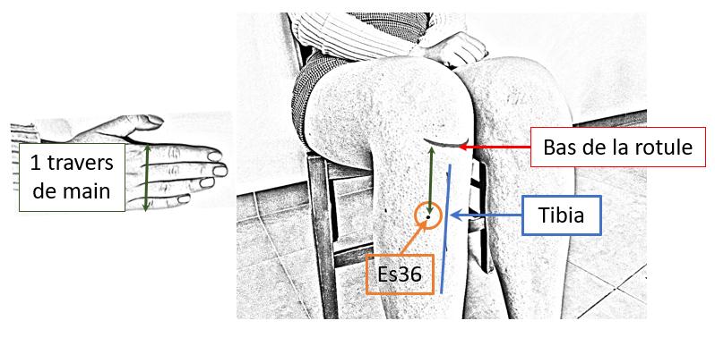 Auto-massage chinois Stimuler l'immunité avec le massage des  points Estomac 36