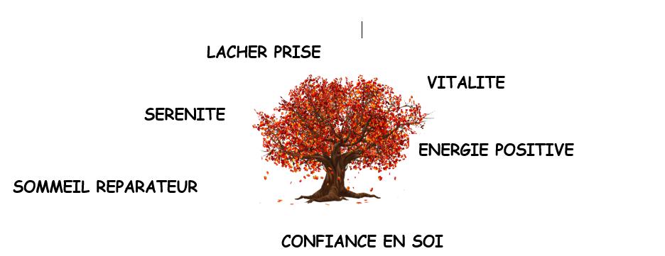 Atelier bien-être, sophrologie et auto-shiatsu: confiance, vitalité ...